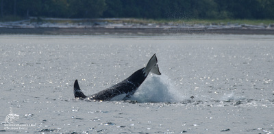 Wildlife in the San Juan Islands
